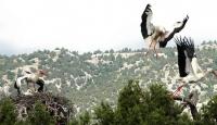 Kuş Gözlemcilerinin Yeni Gözdesi