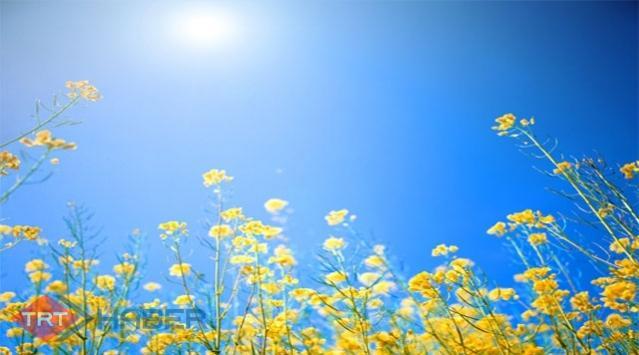 Çiçek Açma Geni Bulundu
