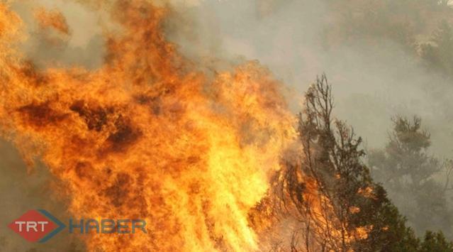 Bodrumda Orman Yangını
