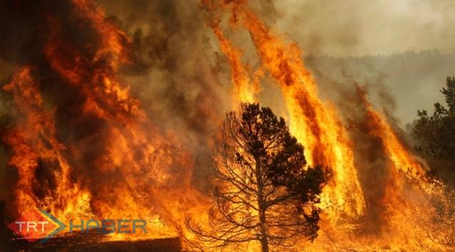 Aydında Orman Yangını