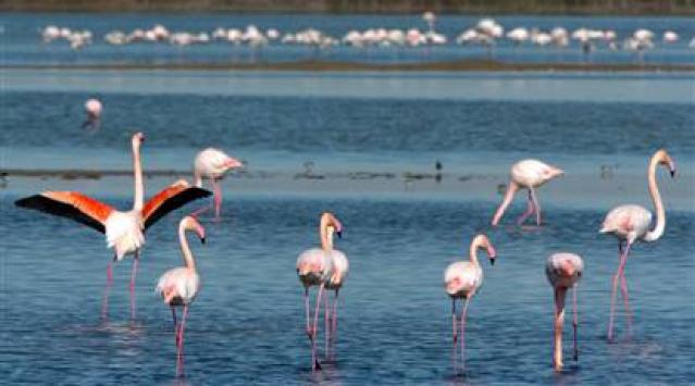 Kuş Cenneti Dünyaya Açılma Yolunda
