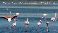 Kuş Cenneti Dünya'ya Açılma Yolunda