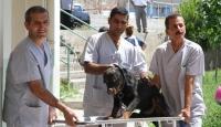 Türkiye'nin İkinci Hayvan Hastanesi