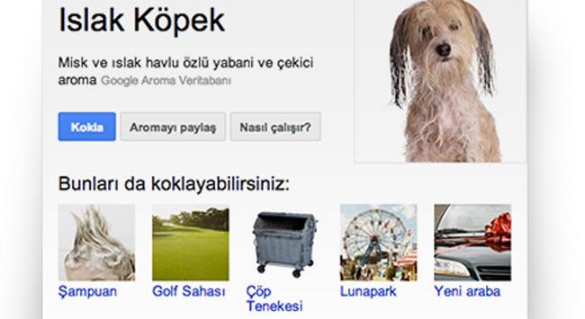 "Googledan ""koku"" hizmeti"