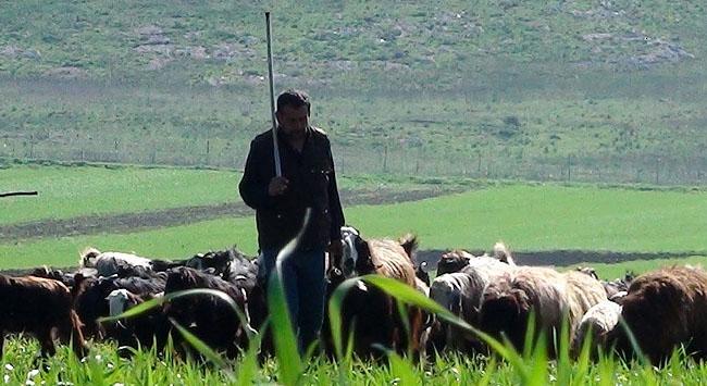 Çobanlar 3 bin lira maaşı az buluyor
