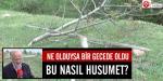 Orduda ağaç katliamı