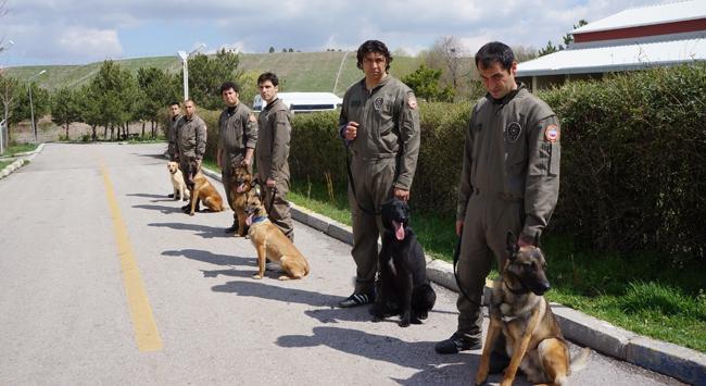 Kaçakçıların korkulu rüyası köpekler tedavi altında