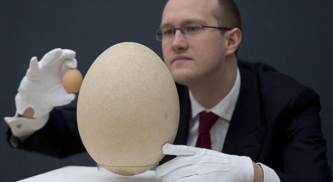 400 yıllık yumurtaya büyük teklif