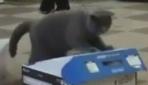 Kara kedi ak kediyi hapsetti!