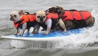 Köpeklerin Sörf Tutkusu