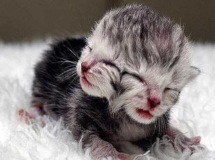 İki Yüzlü Kedi 12 Yıl Hayatta Kalarak Rekor Kırdı