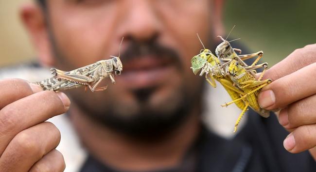 BMden açlığa böcekli alternatif
