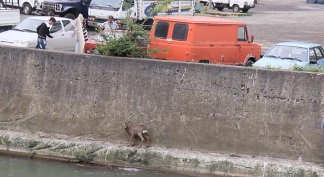 Balıkçı ağıyla kurtarıldı