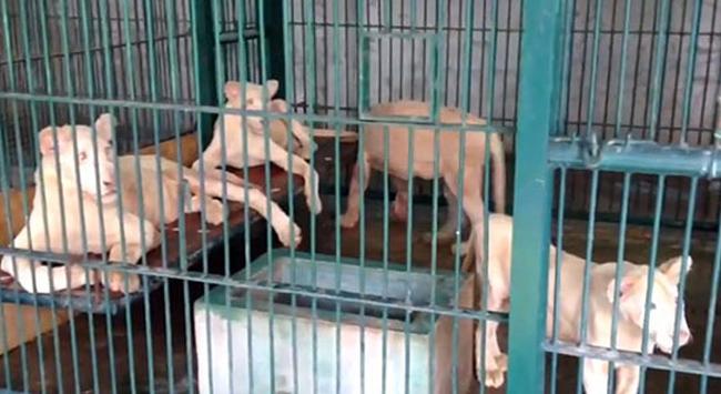 Bir eve baskında 14 aslan ele geçirdi