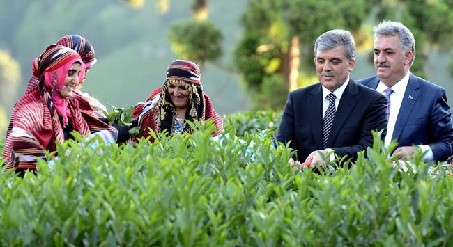 Cumhurbaşkanı Gülden Rizede çay mesaisi!