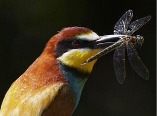 Kuşların Yaşamından Hiç Görmediğimiz, Muhteşem Kareler
