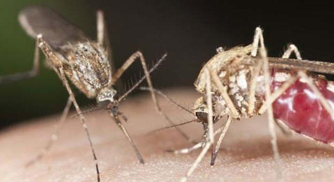 Sivrisineklerden uzak durmak için bunlara dikkat!