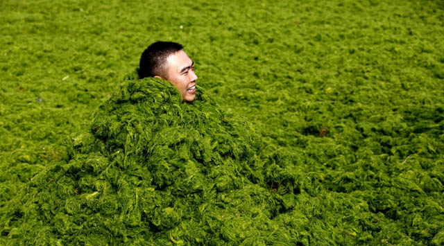 Çinde yosun istilası!