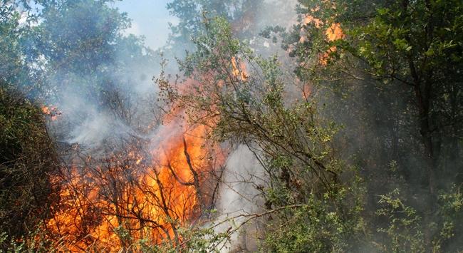 İstanbul Beykozda orman yangını
