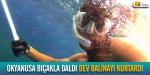 Dev balinayı balık ağlarından böyle kurtardı