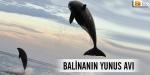 Balinanın yunus avı