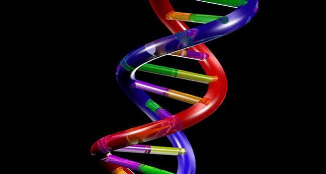 Türk bilim adamından kansere karşı DNA onarımı buluşu