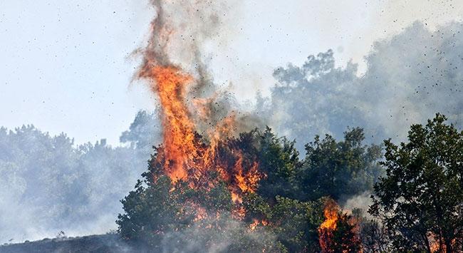 Salihlide orman yangını