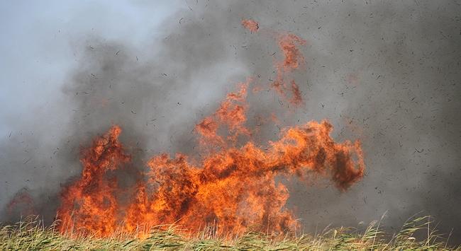 Kızılırmak Deltasında yürek burkan yangın