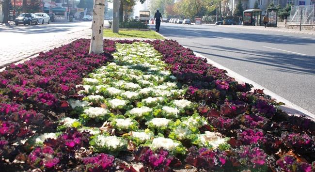 Caddelere 100 bin adet lale soğanı, nergis ve yıldız çiçeği