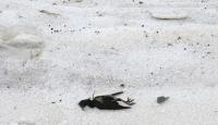 6 Bin Ölü Kuş Sahile Vurdu