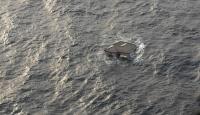 Tsunaminin Sürüklediği Eşyalar Hala Denizde