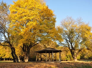 Sonbaharın Renkli Dünyası