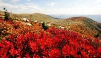 Sonbahar'ın Renkli Dünyası