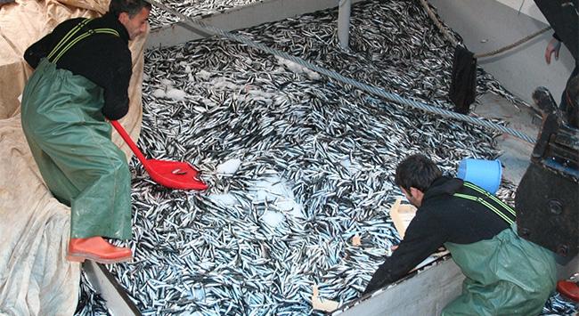 1 ton balığı bedava dağıttılar