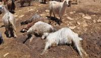 Bolu'da Tuhaf Hayvan Ölümleri