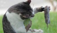 Kedinin Fareyle Oynadığı Gibi...