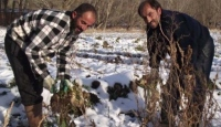 Kar Yağdı Ürün Tarlada Kaldı
