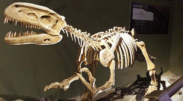 Çölde Dinozor Yuvası Bulundu