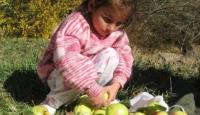 Gümüşhane Elmasını Çernobil bitirdi