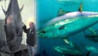 Dev Bir Ton Balığı Yakaladı Ama Sevinemedi!