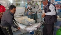 95 kiloluk orkinos yakaladılar