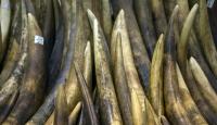 Afrikada fil dişi ve gergedan boynuzu kaçakçılığı