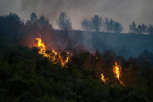 Yalovada orman yangını