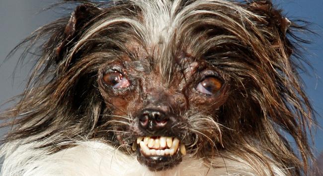 Amerika birleşik devletleri'nin california eyaleti ilginç bir köpek