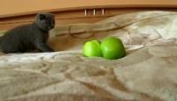 Bu Kedi Ne Yapmaya Çalışıyor?