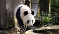 Pandalar Sporda