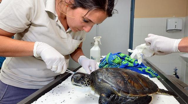 Kaplumbağaya matkaplı işkence