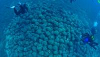 Denizin dibindeki görüntü büyülüyor