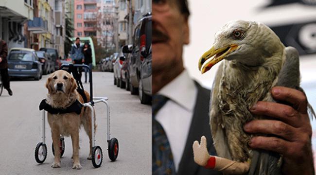 Martıya protez, köpeğe yürüteç takıldı