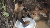 Bu Maymun Bulaşık Yıkıyor